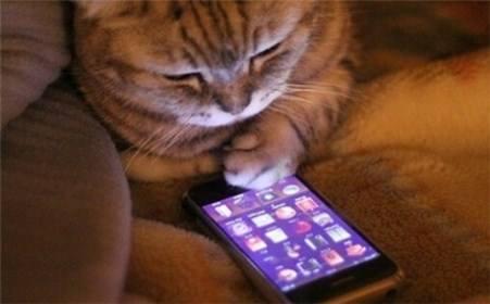 被窝里玩手机