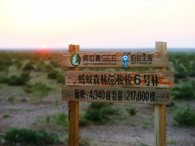 蚂蚁森林现场指示牌